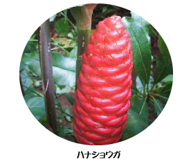 hanasyouga